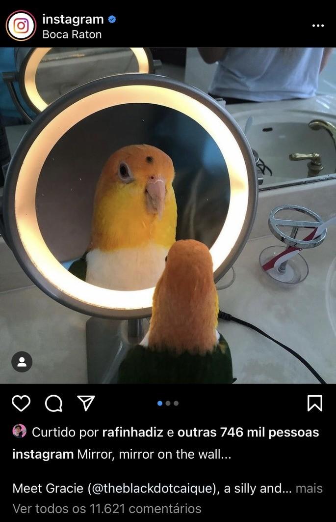 Foto quadrada de um passarinho postada no Instagram