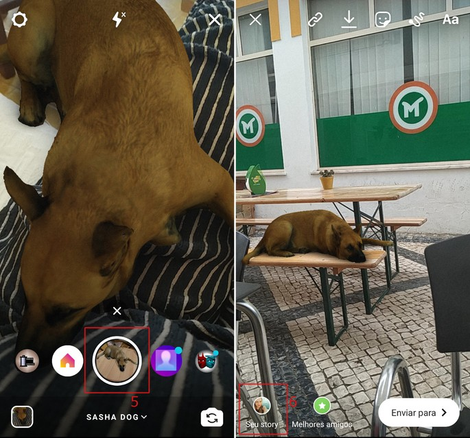 Filtro cachorro Instagram Sasha Dog