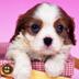 Imagem do aplicativo Cute Puppy Wallpaper