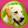 Imagem do aplicativo Dogs 360